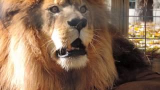 Download Exotic Pet Trade Video