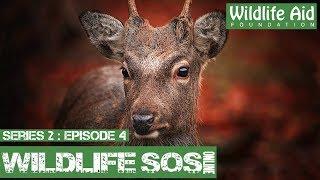 Download Deer Hurdles 6ft Net!: Wildlife SOS Online S2 - Episode 4 Video