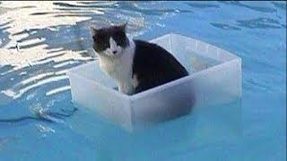 Download 【面白い動画】 かわいい猫 - かわいい犬 - 最も面白いペットの動画 #27 Video