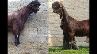 Download World's WEIRDEST Animals Video