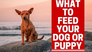Download What Kind Of Food Should You Feed Your Dog Video