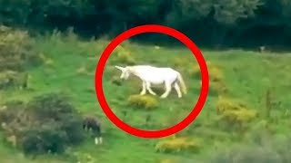 Download 5 Unicorns Caught on Camera & Spotted In Real Life! Video