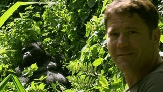 Download Gorilla shows Steve who's boss - Deadly 60 - Series 2 - BBC Video