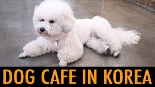 Download Dog Cafe in Korea (KWOW #149) Video
