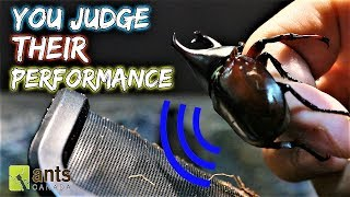 Download YOU ARE THE JUDGE | Singing Beetle Competition Video