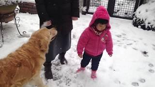 Download 2018年ついに雪と遭遇!ゴールデンレトリバー「アリア」ちゃんと愉快な家族2018 golden snow Video