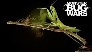 Download When Mantises Attack #2 - MONSTER BUG WARS Video