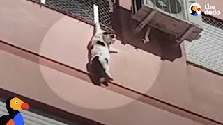Download Cat Dangling From Building Rescued By Hero | The Dodo Video