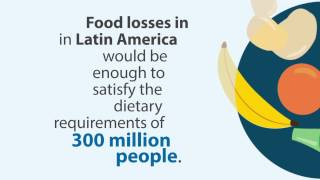 Download Latin America and the Caribbean: What do we know up to now about food losses and waste? Video