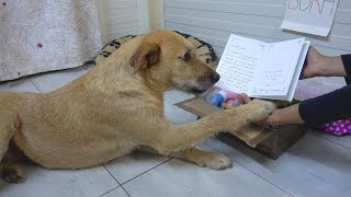 Download Sad Shelter Dog's Reaction When She Receives Sweet Letter From Adoptive Mom Video