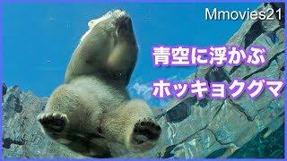 Download リラの諦めない心 青空に浮かぶホッキョクグマ Polar Bears Life Video