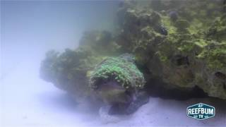 Download Diagnosing & Eliminating Cloudy Aquarium Water Video
