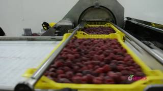 Download Linija za izručivanje svežeg i zamrznutog voća Video
