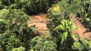 Download Amazon Deforestation & Slavery Toxic VICE Video