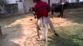 Download Donkey Riding 101 Video