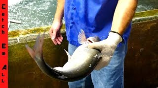 Download Electric CATFISH POND! **DELICIOUS** Video