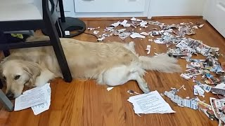 Download Who Did That?!   Guilty Dogs Video Compilation 2017 Video