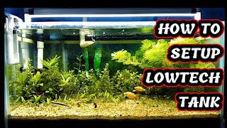Download How to setup super low tech dirted planted aquarium | Aqua adventure | Video