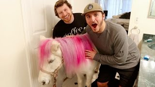 Download SURPRISING FRIENDS WITH A REAL PONY!! Video