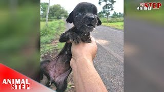 Download Starving Stray Puppy Ignored From Everyone Finally Is Getting Rescued Video