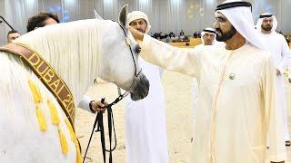 Download محمد بن راشد يشهد ختام بطولة دبي الدولية للجواد العربي Video