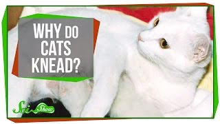Download Why Do Cats Knead? Video