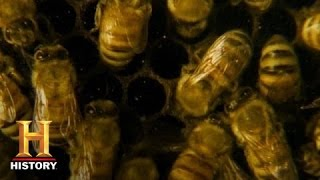 Download A World Without Bees | History Video