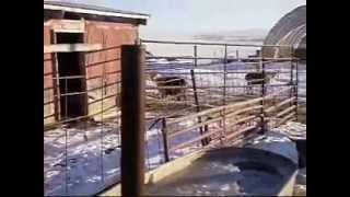 Download wood fired water heater.wmv Video