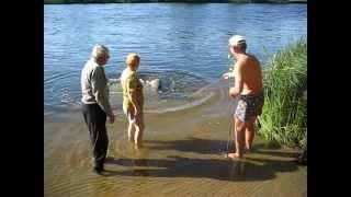 Download Рыба (гигант) поймана в Волге (Самара) Big Fish Video