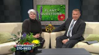 Download Lisa answers viewers' plant, gardening questions Video
