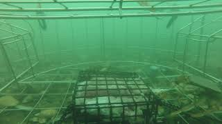 Download I dropped my crab trap at my marina. You won't believe what happened next. Video