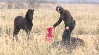 Download FOUR PAWS heroes: How a wild horse thanks its savior Video