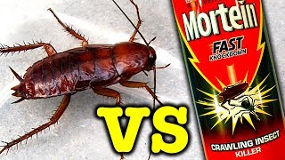 Download Giant Cockroach Vs Mortein Rapid Kill Bug Spray And Spiders Video