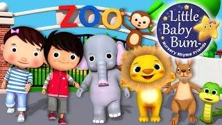 Download Zoo Song | Animal Song | Plus Lots More Nursery Rhymes | From LittleBabyBum! Video