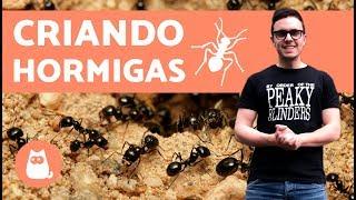 Download ¿Cómo empezar una colonia de hormigas? | Criando hormigas Video