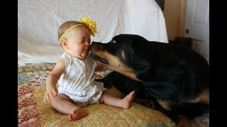 Download Top 10 Best Of Cute RottWeiler And Babies Playing Videos Compilation - Funny Dog And Baby Videos Video
