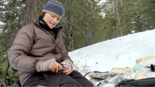 Download Will climate change spell the end of the Clark's Nutcracker in the Greater Yellowstone Ecosystem? Video