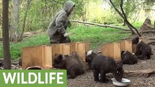 Download Activist documents feeding time routine for orphaned bear cubs Video