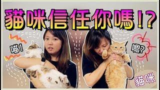 Download 【魚乾】五種方法!測試貓咪對你的信任程度...小心別被咬啊! Video