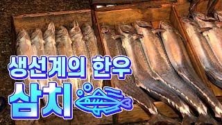 Download [어영차바다야] 생선계의 한우, 삼치 Video