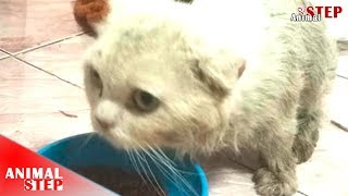 Download Persian Cat Lives In The Garbage for Months Getting Rescued and Adopted Video