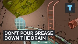 Download Why you should never pour grease down the drain Video