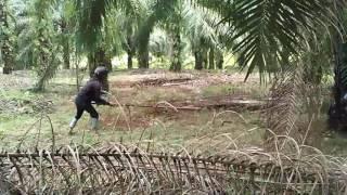Download Berangkat mancing malah ketemu ular king kobra...lihat apa yang terjadi kemudian.. Video
