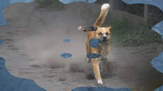 Download Help and Save Abandoned Animals in Taal Volcano Video