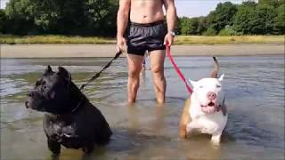 Download Water fun with family and my pitbull girls Panthera and Hennessy Video