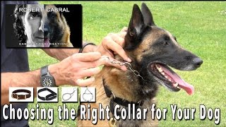 Download Choosing the Right Collar for Your Dog - Robert Cabral Dog Training Video