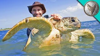 Download Catching Sea Turtles! Video