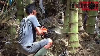 Download Gegaji Mesin untuk Menebang Bambu Petung Video