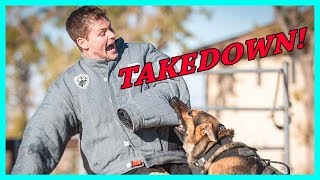 Download Getting Attacked By Police Dogs Video
