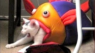 Download TO LAUGH or NOT TO LAUGH is NO QUESTION HERE, YOU WILL LAUGH! - Funny ANIMAL compilation Video